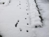 Snowmarch